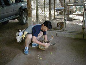 タイ カンチャナブリートレッキングツアー トラと戯れる