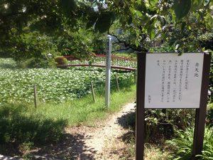 長福寺 弁天池