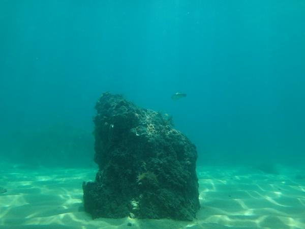 水晶浜でシュノーケリング