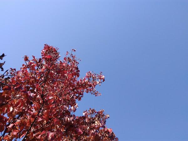 秋晴れの母の3回忌