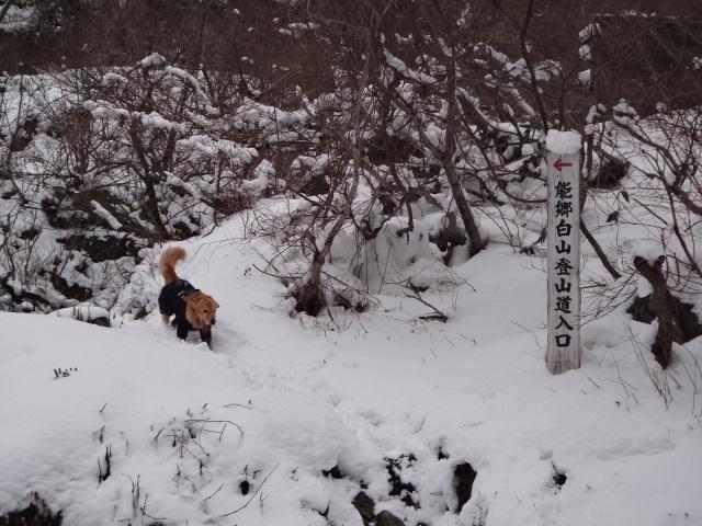 山登り 能郷白山 登山口に到着 ゴールデンレトリバーのララ 標識と記念撮影