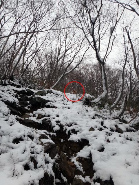 山登り 能郷白山 急傾斜から覗きこむゴールデンレトリバーのララ
