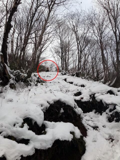 山登り 能郷白山 急傾斜から覗きこむゴールデンレトリバーのララ まだですか~