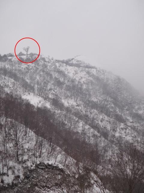 山登り 能郷白山 ハートの木を目指します