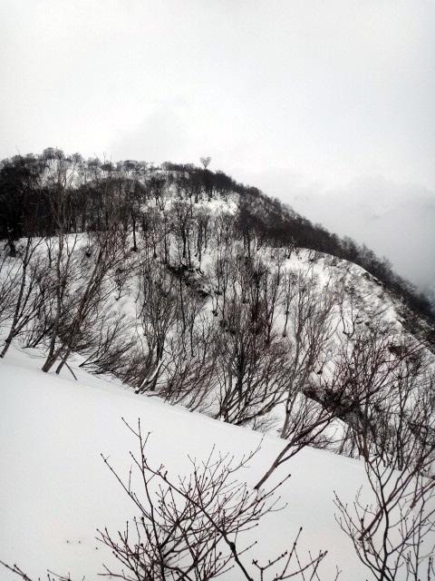 山登り 能郷白山 ハートの木