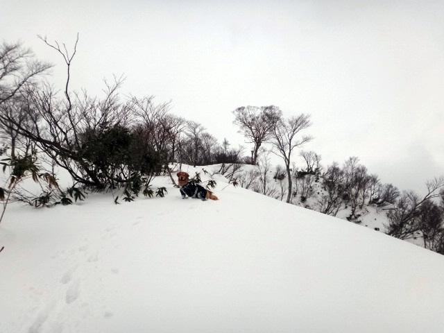 山登り 能郷白山 ハートの木までもうすぐ 早くと急かすゴールデンレトリバーのララ