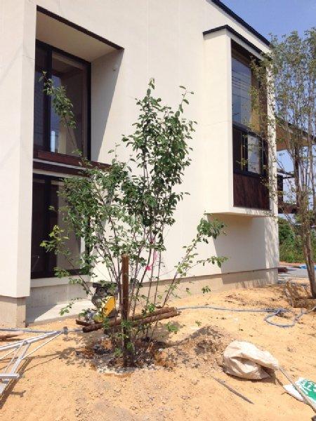 岐阜のFrameWork設計事務所の物件「小屋名の家」 植栽の作業中