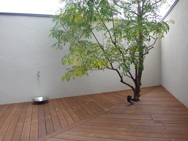 04 岐阜のFrameWork設計事務所の物件「鏡島ベース」 の中庭 シマトネリコが植えられています