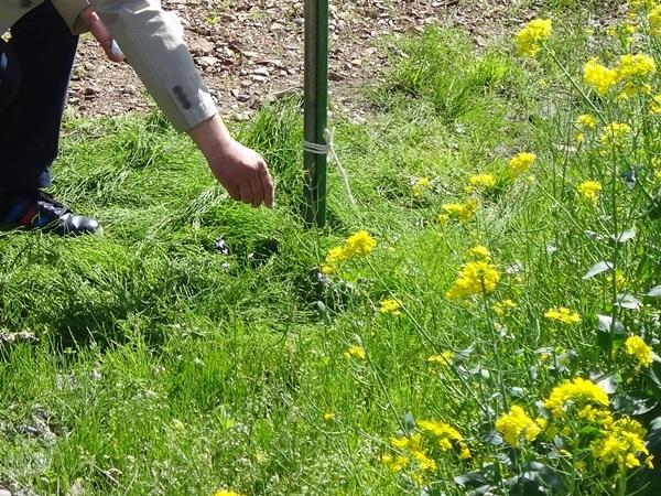 岐阜のFrameWork設計事務所「鏡島ベース」 地鎮祭 菜の花とお清めをするお施主さんの手