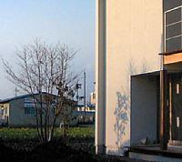 岐阜のFrameWork設計事務所の物件「西中島の家」にヤマボウシが植わりました。