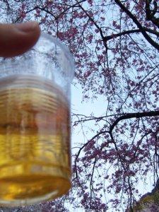 桜の樹の下でビール
