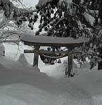 岐阜県の世界遺産白川郷へ 雪に半分埋もれた神社の鳥居