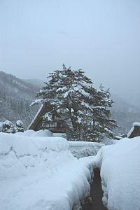 岐阜県の世界遺産白川郷へ 合掌造りは豪雪の中、さすが雪国です
