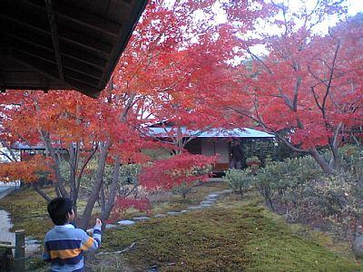 建築家 谷口吉生さんの豊田市美術館 茶室 モミジが紅葉してキレイです