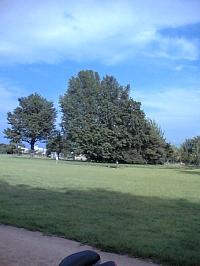 岐阜のFrameWork設計事務所の物件「各務原の家」の近くにある市民公園 緑が多く気持ちがいい