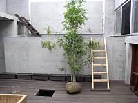岐阜 FrameWork設計事務所 七郷の 中庭 シマトネリコ植え込み作業 設置前